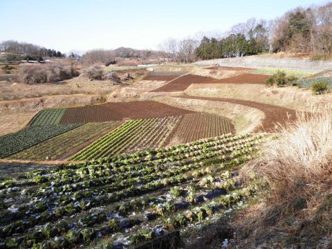 冬の畑31