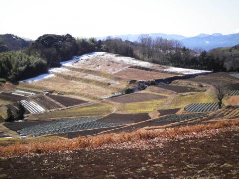 冬の畑80