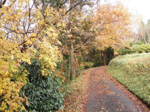 黄葉の林道20