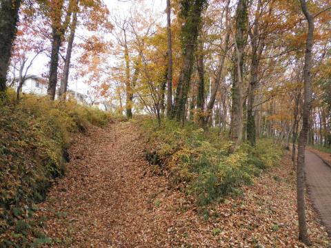 黄葉の散歩道16