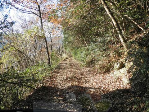 落葉の林道184