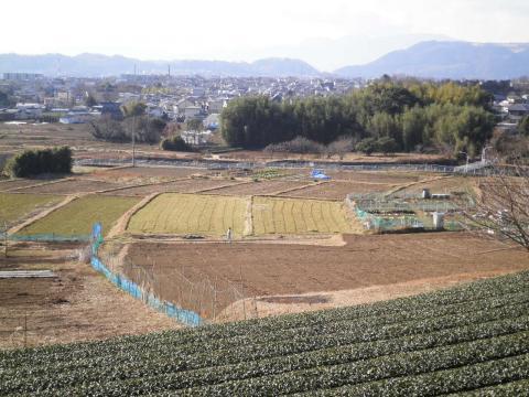 冬の田んぼ003