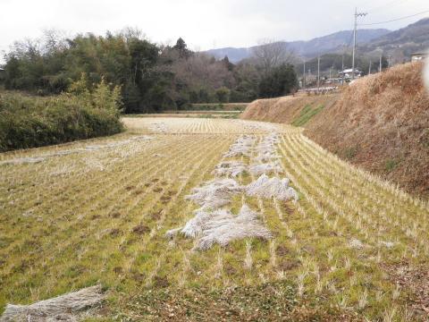 冬の田んぼ56