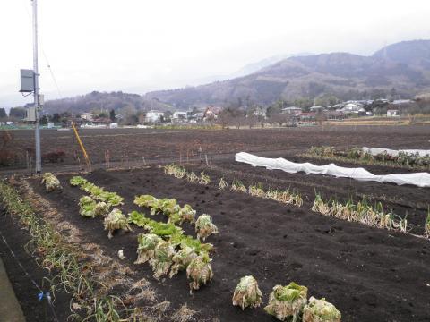 冬の畑64