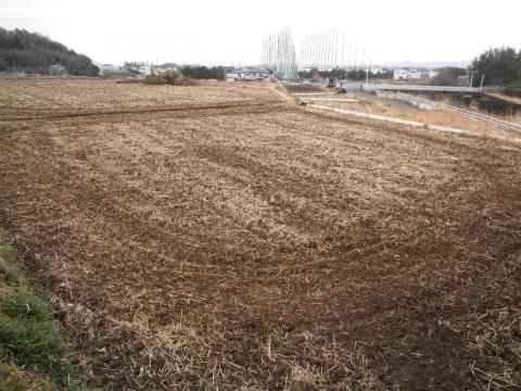 冬の田んぼ61