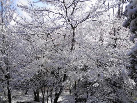 雪の林113