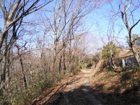 冬木の林道130
