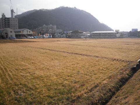 冬の田んぼ007