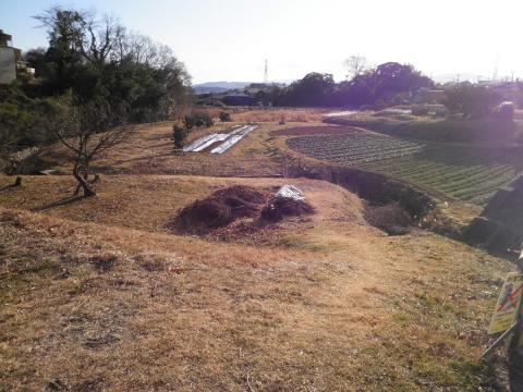 冬の畑56