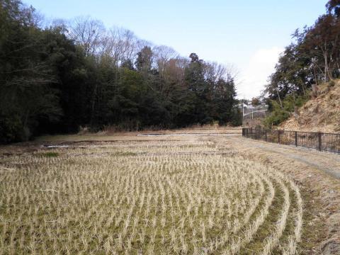 冬の田んぼ11