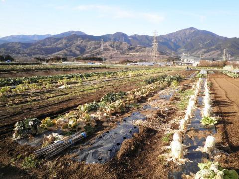 野菜畑64