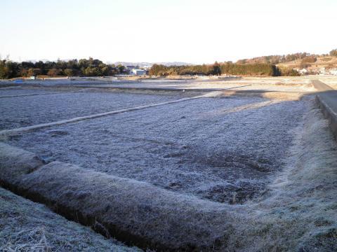 霜の田んぼ29