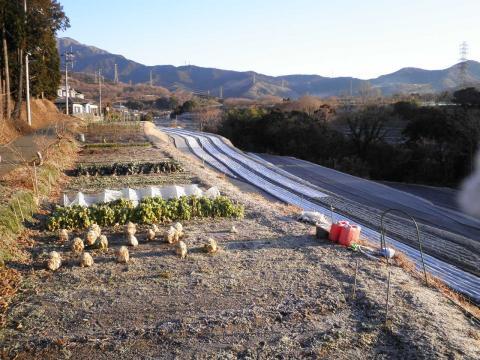 霜の畑43