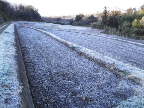 霜の田んぼ39