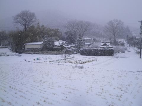 春雪の田んぼ81