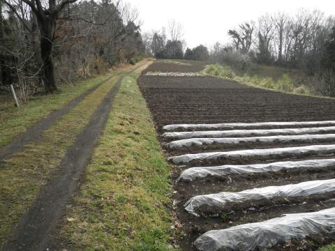 若草の農道26