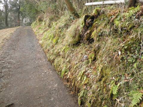 苔の山道06
