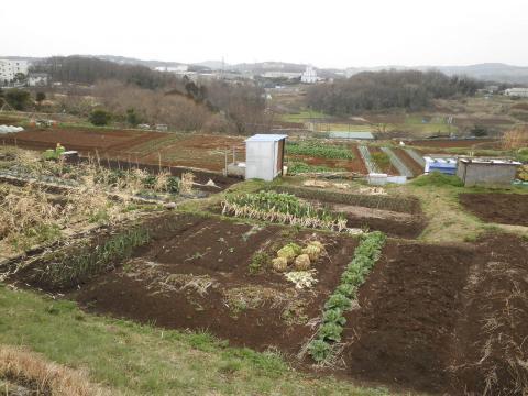 野菜畑111