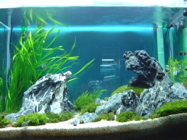 石組水槽 3