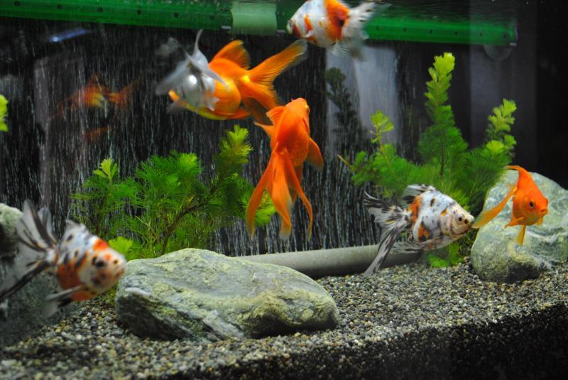 10/16 90cm金魚水槽2