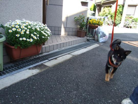 お散歩行こ~