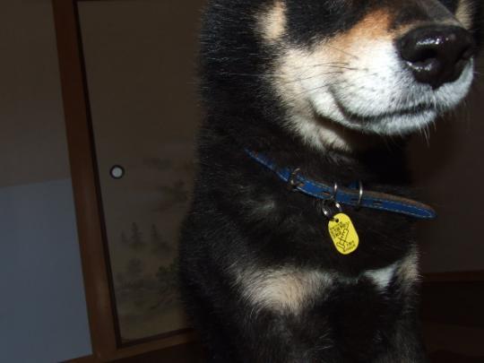 狂犬病の予防注射