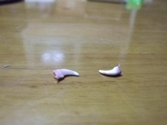 はっ!はっ!歯!