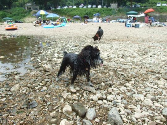 救助犬メリー