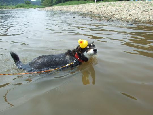 我が家の泳ぎコンテスト