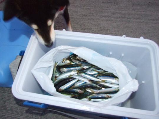 釣りに行ってきました
