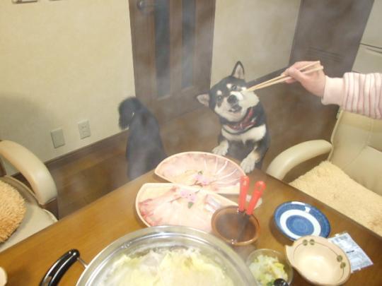 お鍋の季節になりました