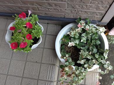暑くてもきれいな玄関の花たち