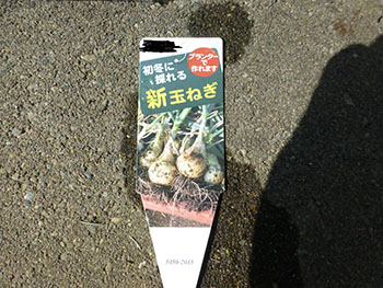 新玉ねぎ20131013_1