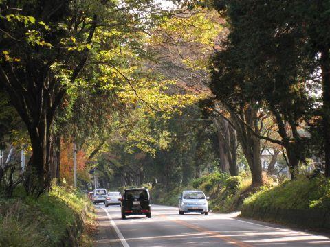 野沢町の杉並木