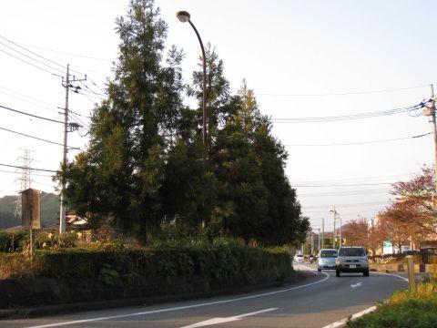 徳次郎六本杉
