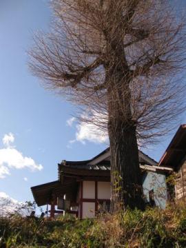 王子神社と大イチョウ