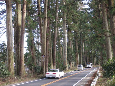 大沢の杉並木