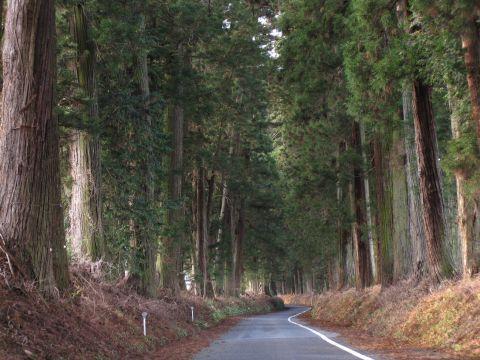 森友の杉並木