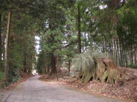 瀬川の七本杉伐痕