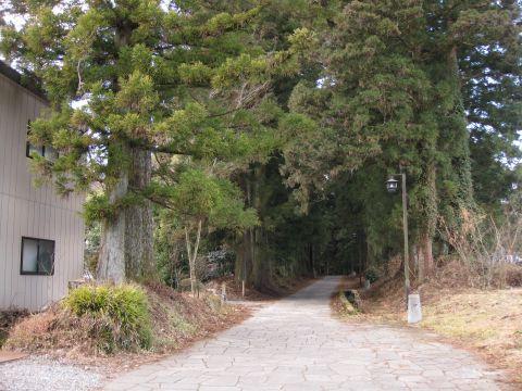 野口の杉並木