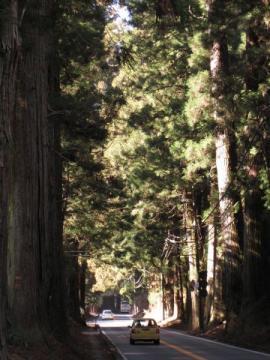 七里の杉並木