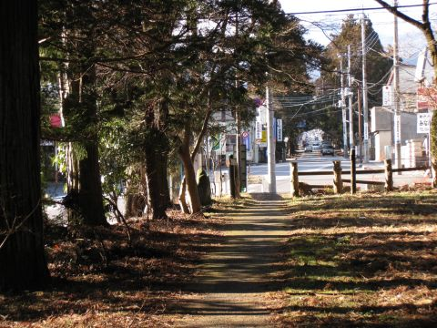 東和町の杉並木