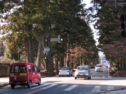 相生町の杉並木