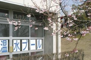 b画像 2011春 038