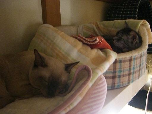 fluffy&hikaru12