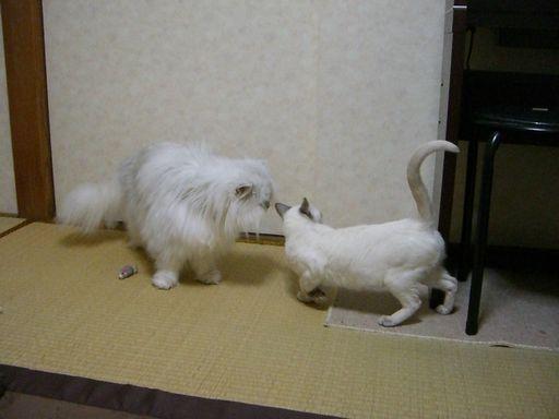 yutaka&miu 1