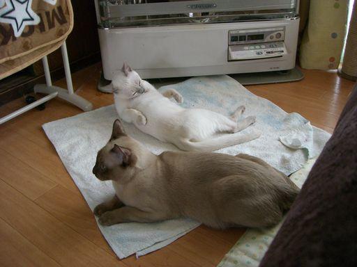 hikaru&miu 2