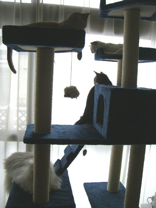 fluffy&yutaka&hikaru&miu 1