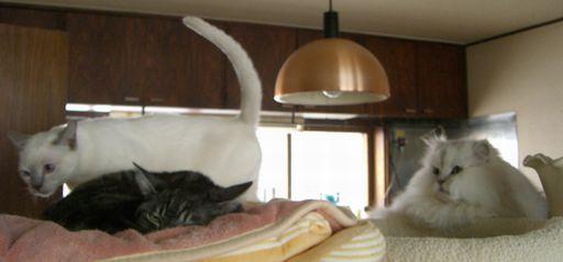 fluffy&yutaka&miu 1