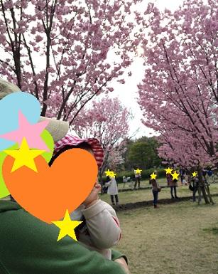 これ何桜?
